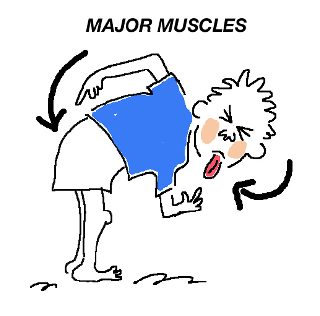Major Muscles